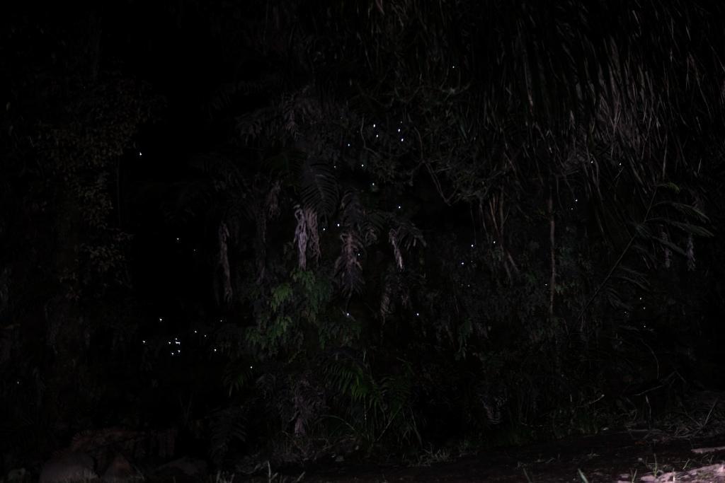 Glühwürmchen in einer Höhle in Neuseeland