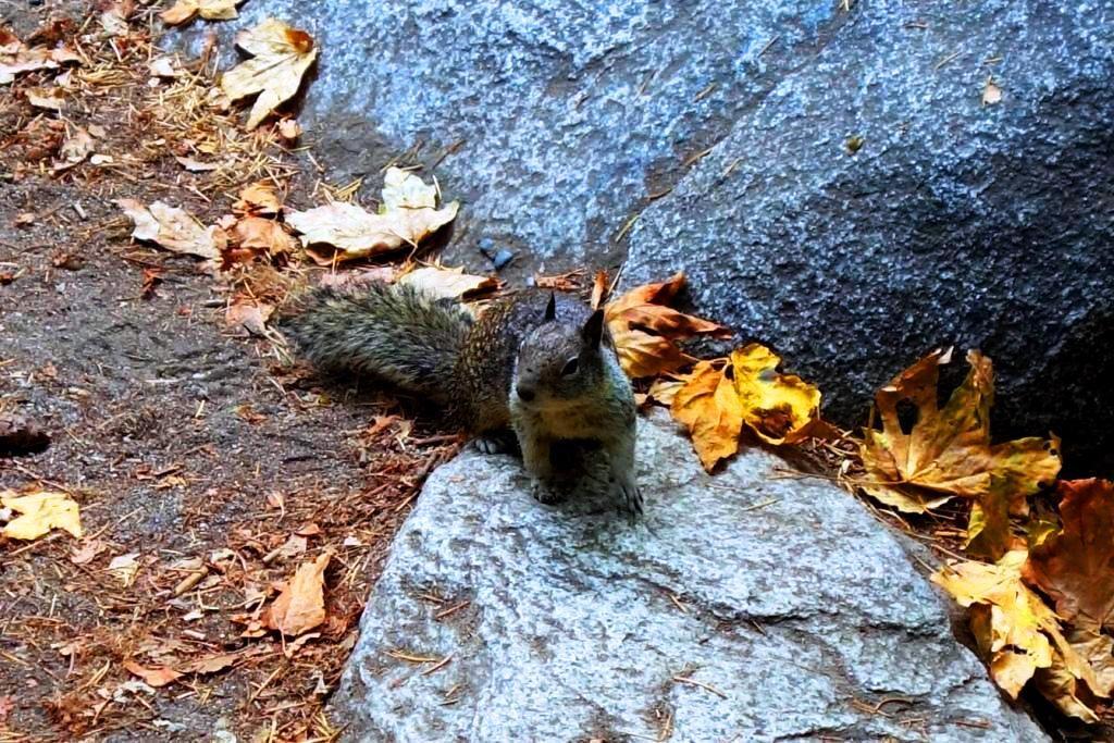 Halloween in den USA - Eichhörnchen