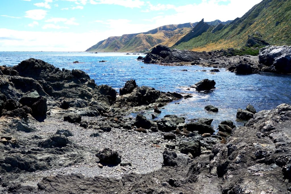 Cape Palliser - Robbenkolonie