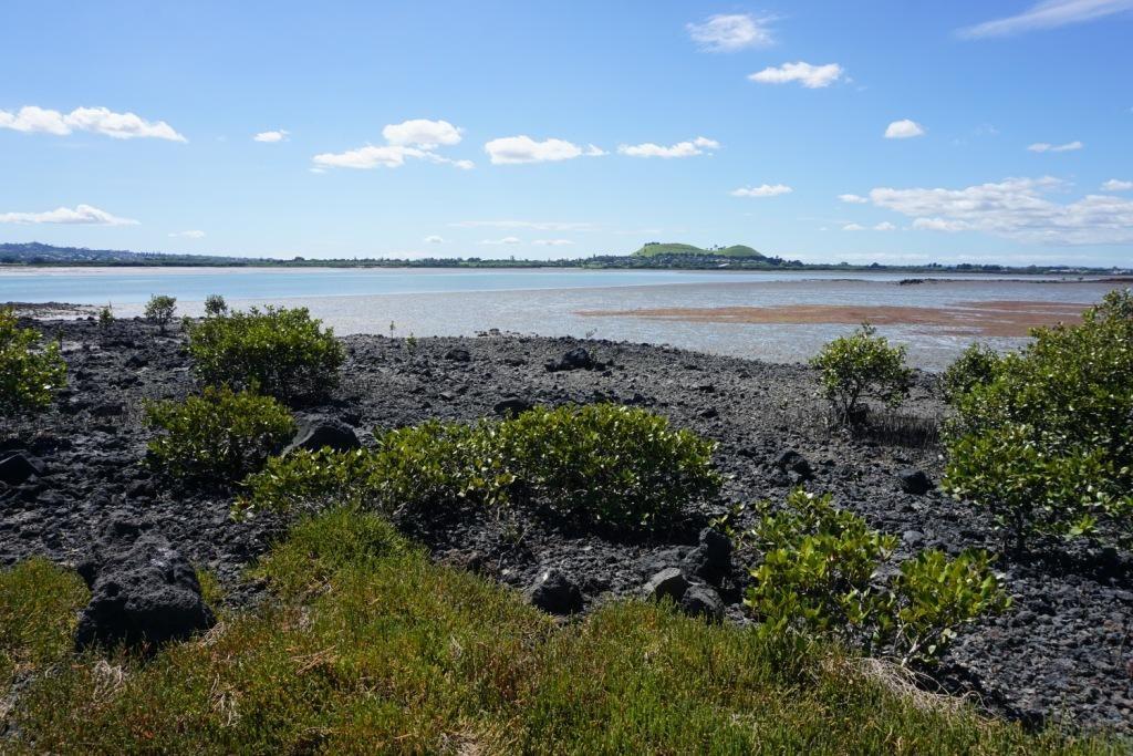 Puketutu Island: Blick über den Manukau Harbour nach Mangere