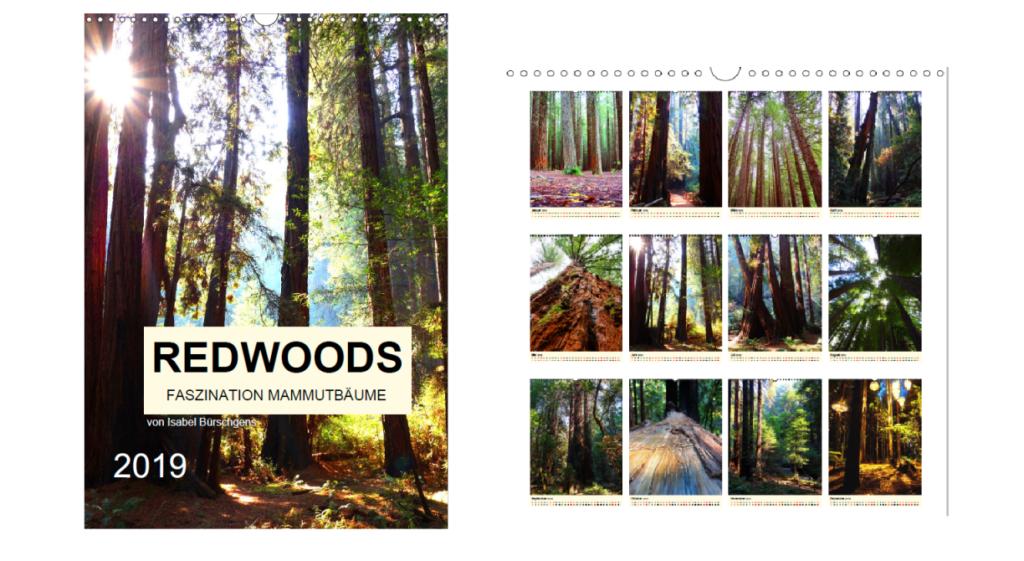 Kalender - Redwoods - Faszination Mammutbäume