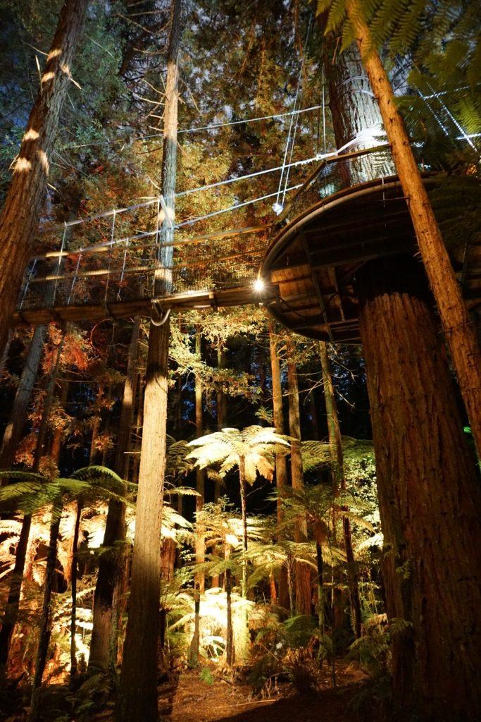 Nightlights am Treewalk in den Redwoods
