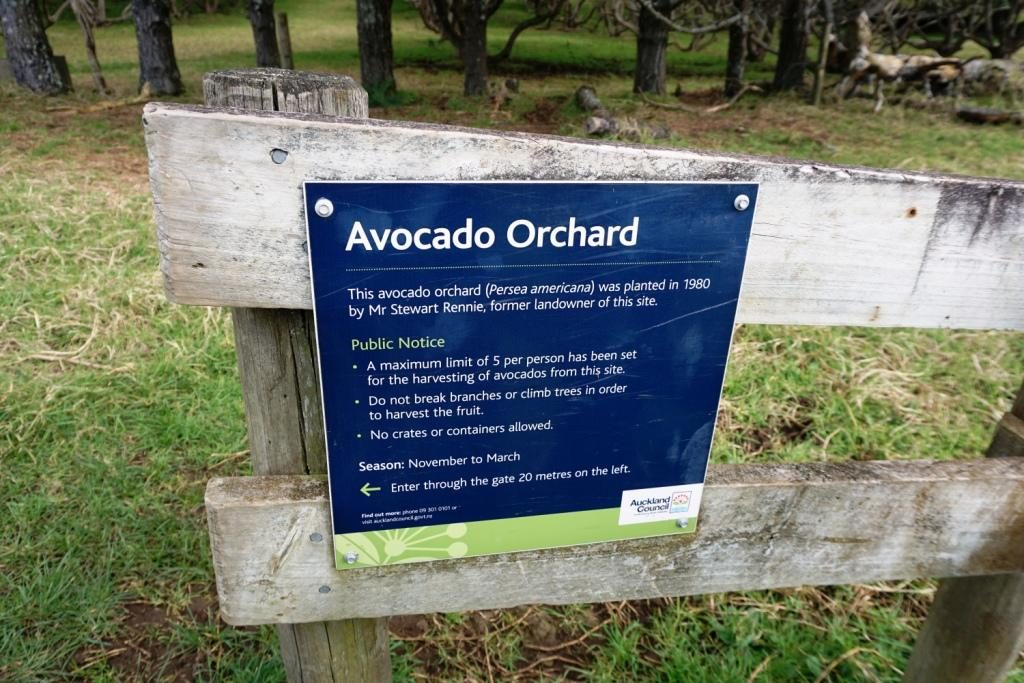 Avocado Orchard