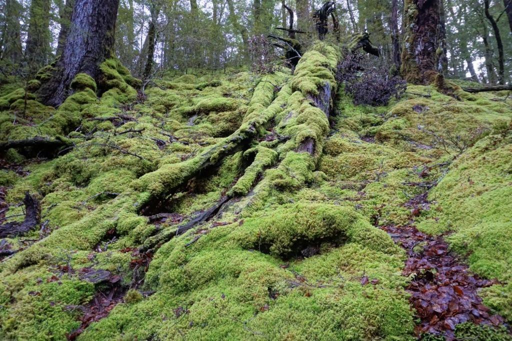 Routeburn Track - Moosüberwachsener Waldboden