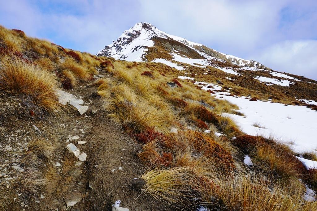 Ben Lomond Track - Blick zum Gipfel