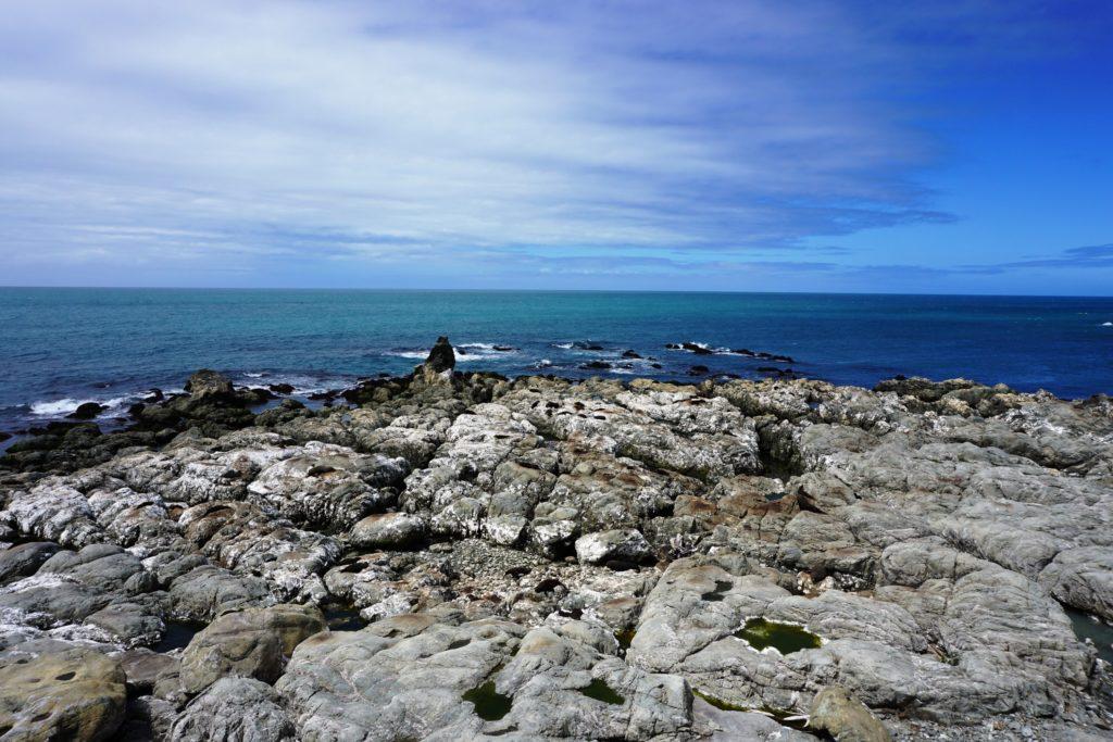 Die Küste vor Kaikoura