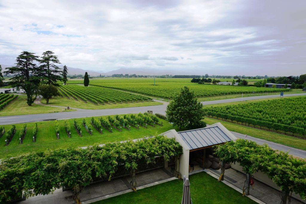 Weinanbau in Blenheim