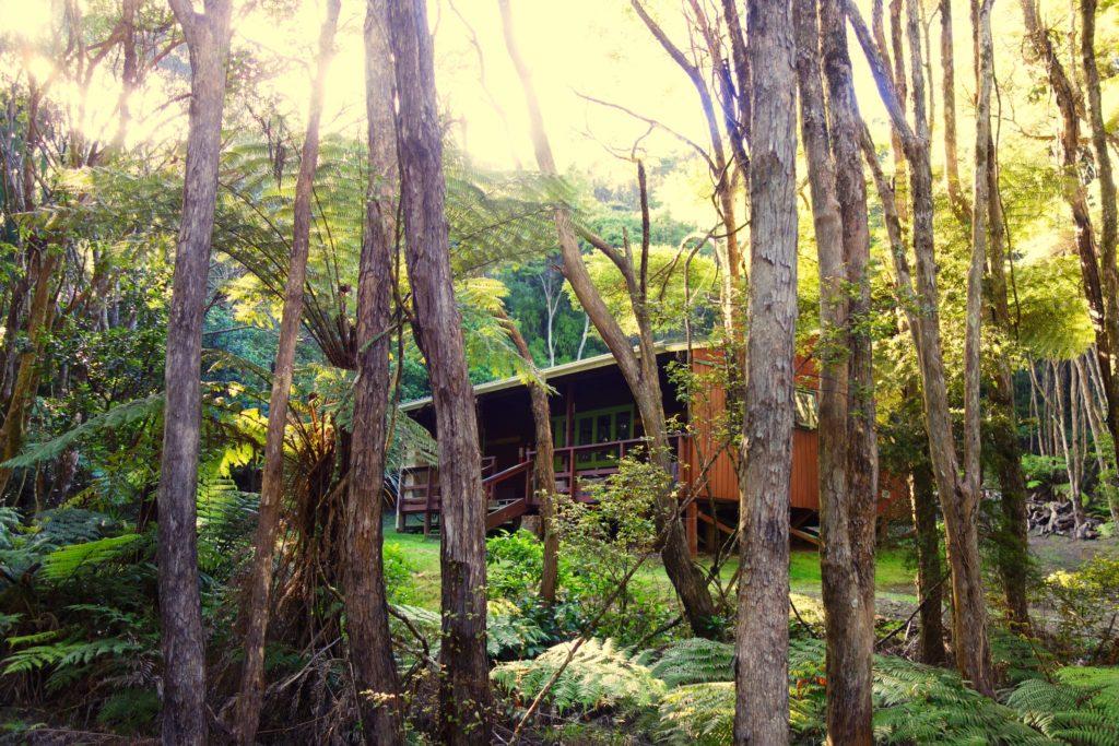 Kaiaraara Hut mitten im Wald