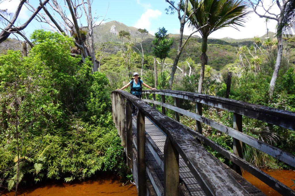 Brücke über einen Bach im Feuchtgebiet
