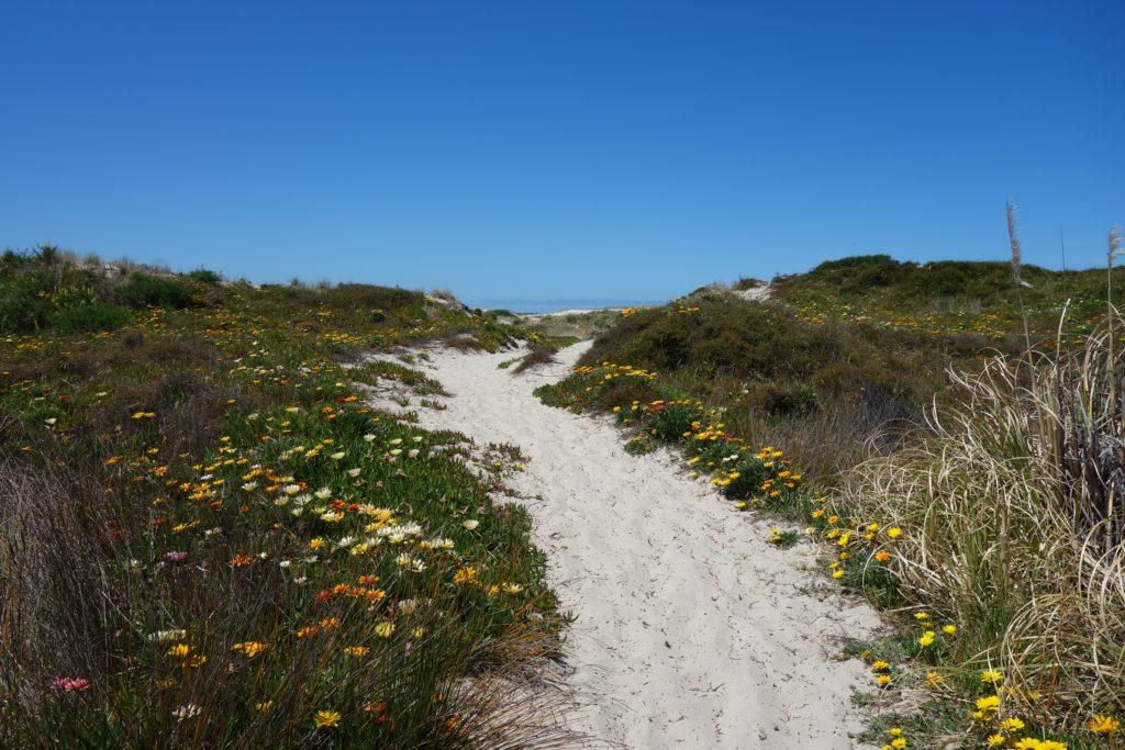 Zugang zum Kaitoke Beach