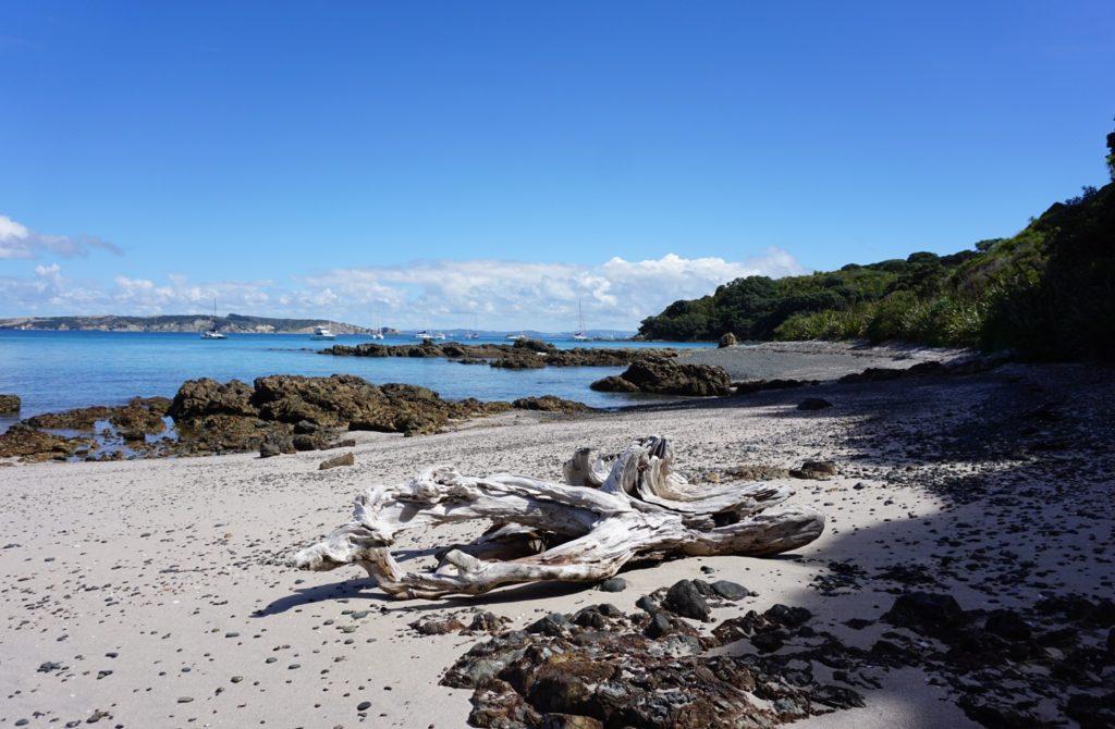 Hobbs Beach auf Tiritiri Matangi mit dem Shakespear Regionalpark im Hintergrund