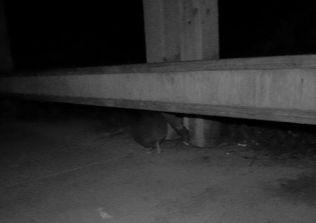Kiwi unter der Parkbank. Eigentlich sieht man nur Hintern und Füße