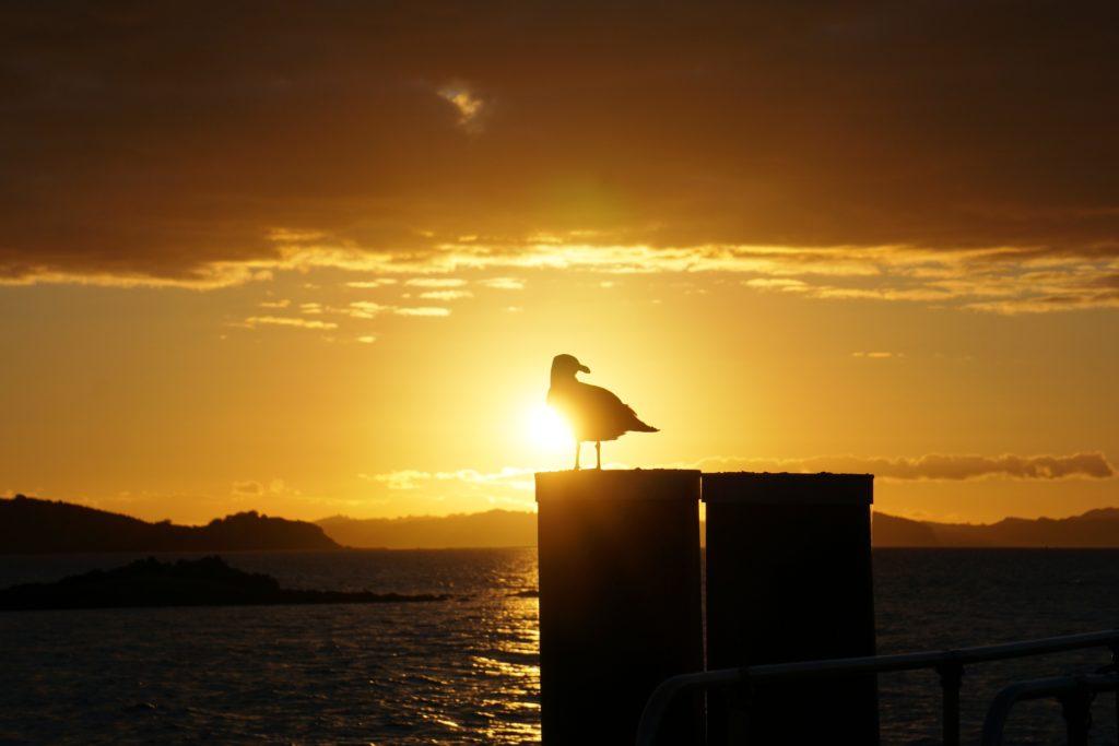 Möwe im Sonnenuntergang am Anlegesteg